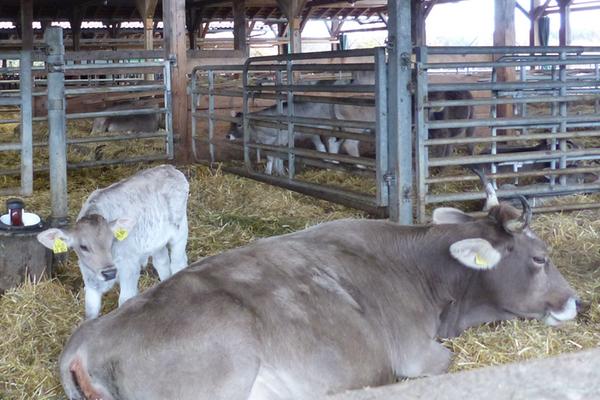 Umweltgerechtigkeit und Nachhaltigkeit in der Milchwirtschaft