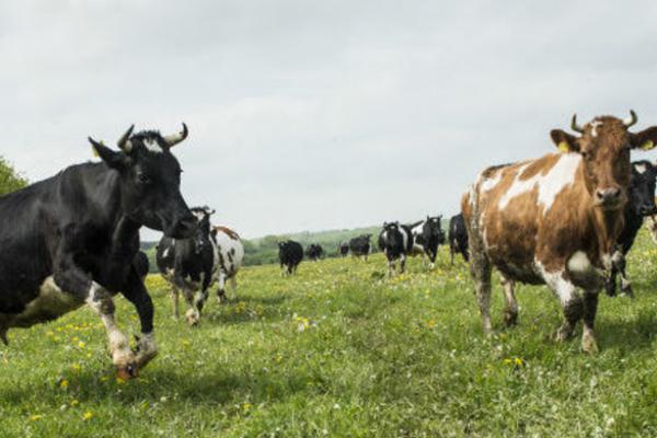 1. Workshop: Umweltgerechtigkeit und Nachhaltigkeit Milch