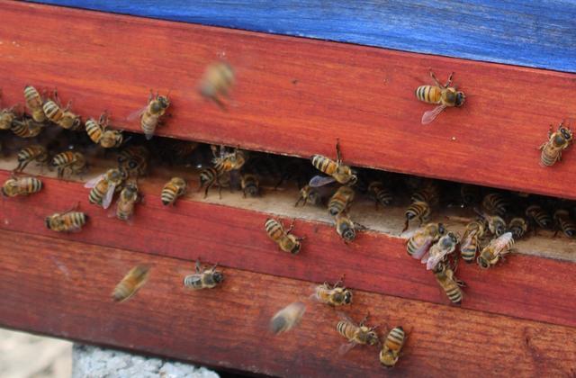 Welt-Bienentag: Zukunft von Mensch & Biene