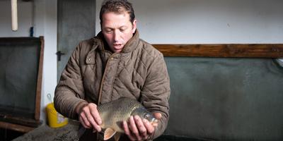 Karpfen – vom Teich auf den Teller