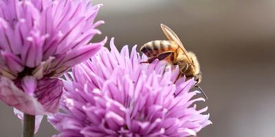 Online-Honigsprechstunde